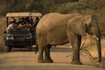 Pilanesberg-Safari
